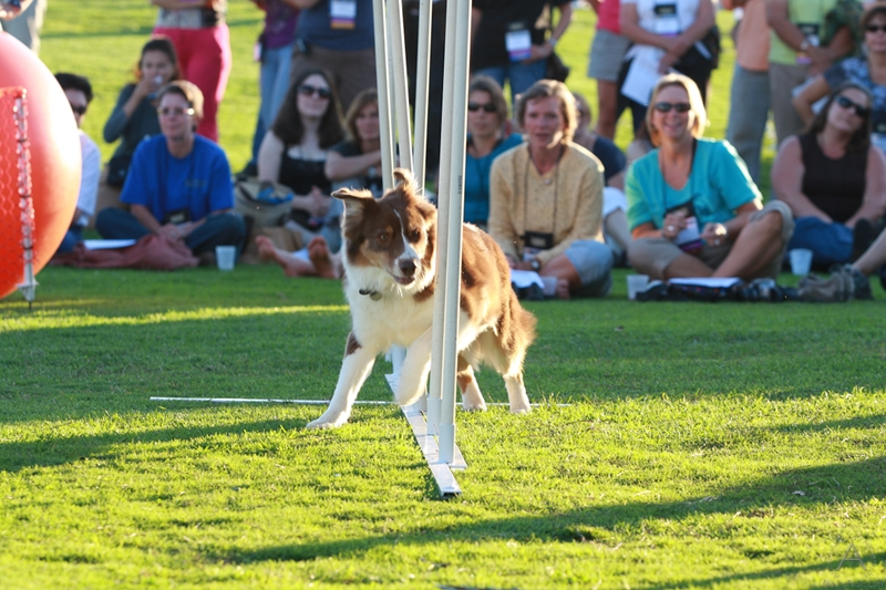 association_of_pet_dog_trainers_international_conference_(105)
