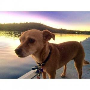 Best running partner Mans best friend running sandiego dog