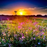 Sunset Near Chula Vista